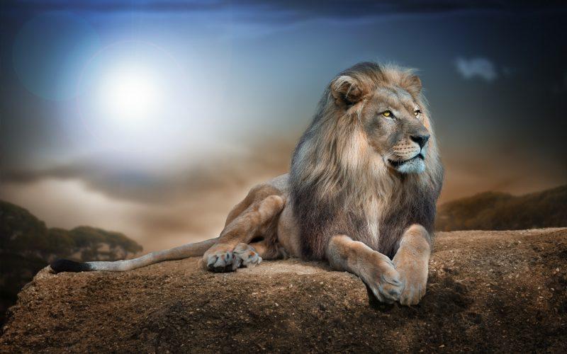 leones-wallpapers-23