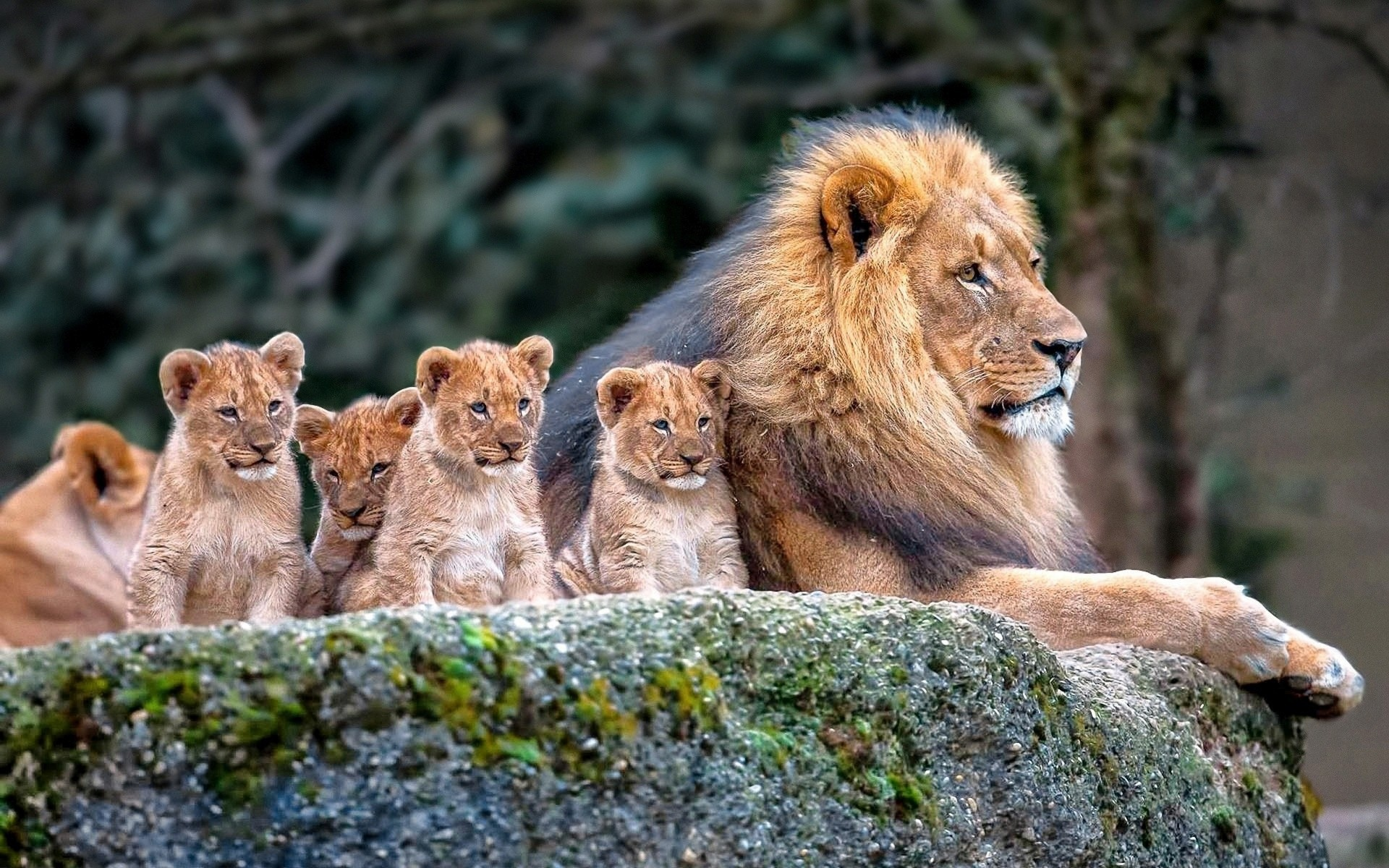 10 Latest Wallpapers Of Baby Animals Full Hd 1080p For Pc
