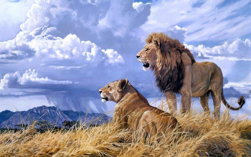 leones-wallpapers-7