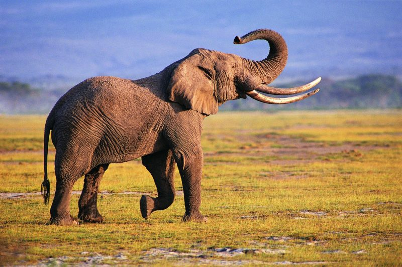 Fondos de pantalla de elefantes wallpapers hd para - Elephant background iphone ...