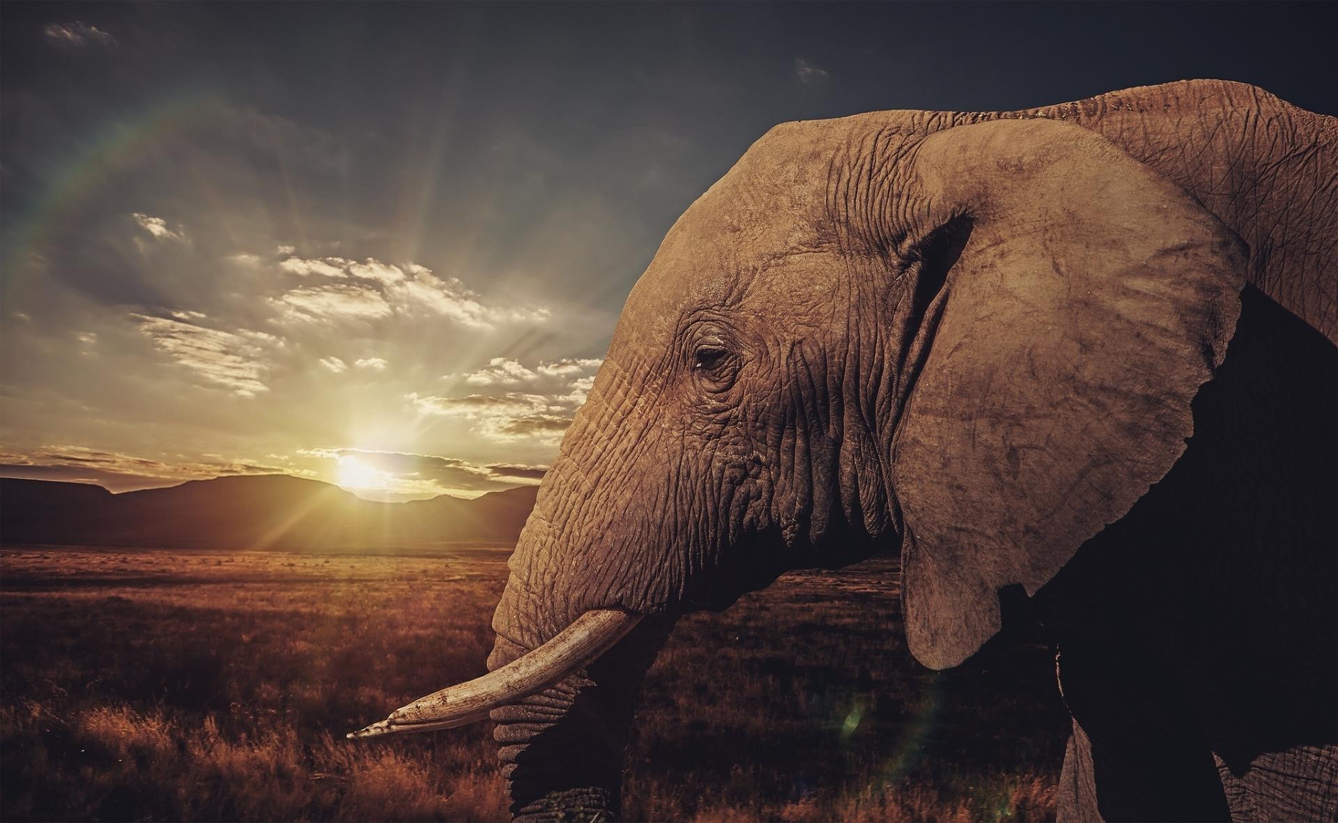 Fondos Para Fotos Hd: Fondos De Pantalla De Elefantes, Wallpapers HD Para