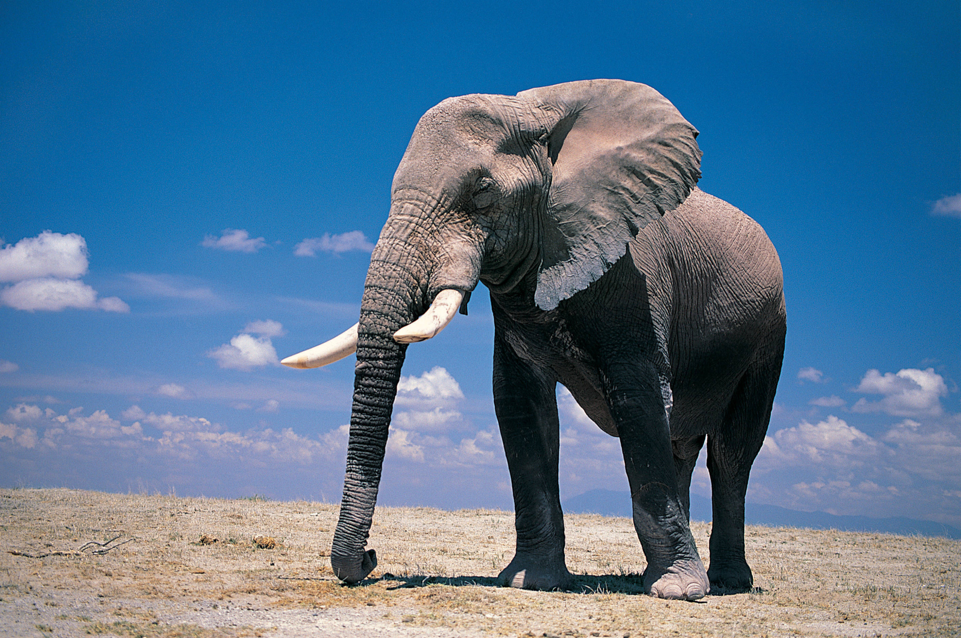 Fondos de pantalla de Elefantes, Wallpapers HD para