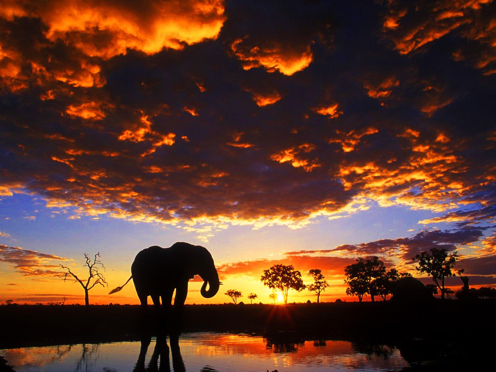 Life Is Beautiful Wallpaper Hd Wallpapers: Fondos De Pantalla De Elefantes, Wallpapers HD Para