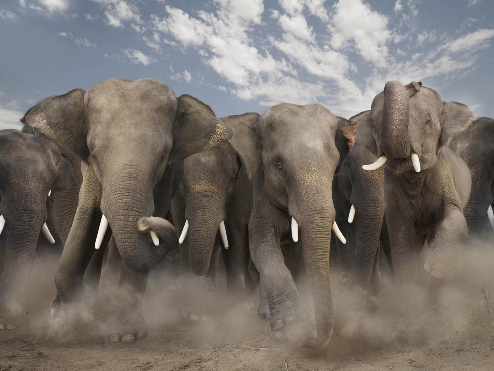 Hd Images Of The Wild Animals Wallpapers And Backgrounds: Fondos De Pantalla De Elefantes, Wallpapers HD Para