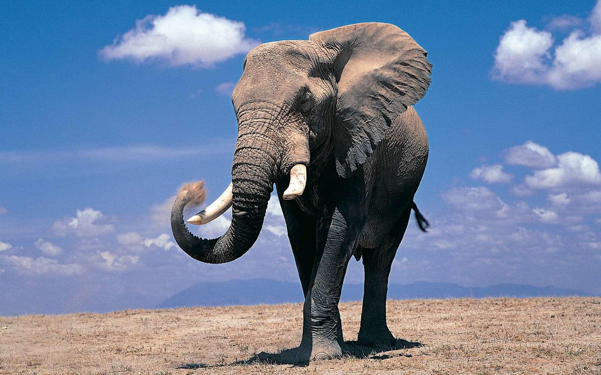 Fondos De Pantalla De Elefantes Wallpapers Hd Para Descargar Gratis