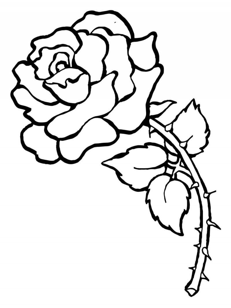 Afbeelding Peper Kleurplaat Dibujos De Rosas Para Colorear Pintar E Imprimir