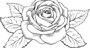 Dibujos y Plantillas para imprimir: Mariposas y flores
