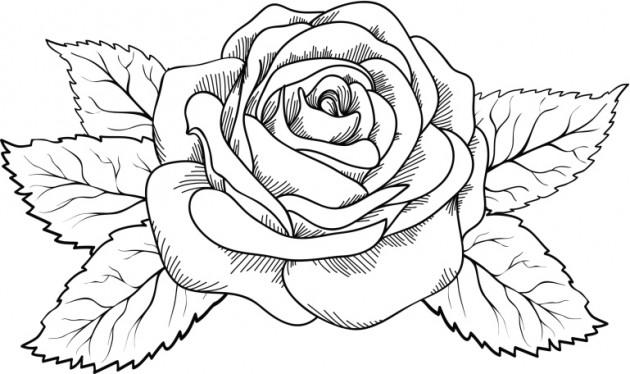 Dibujos Para Colorear Y Pintar Gratis: Dibujos De Rosas Para Colorear, Pintar E Imprimir
