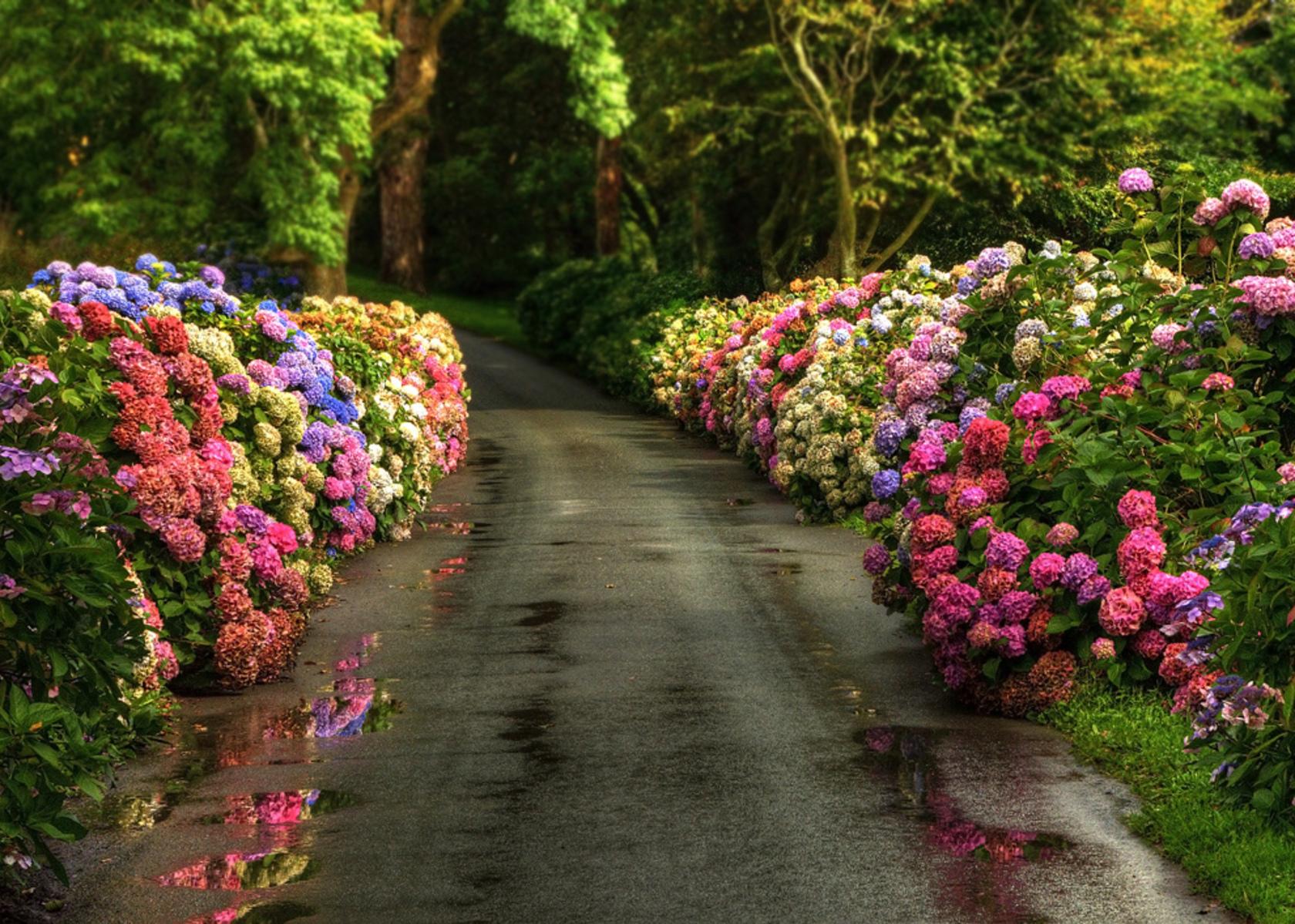 Fondos de pantalla de primavera wallpapers hd for Jardines en primavera fotos