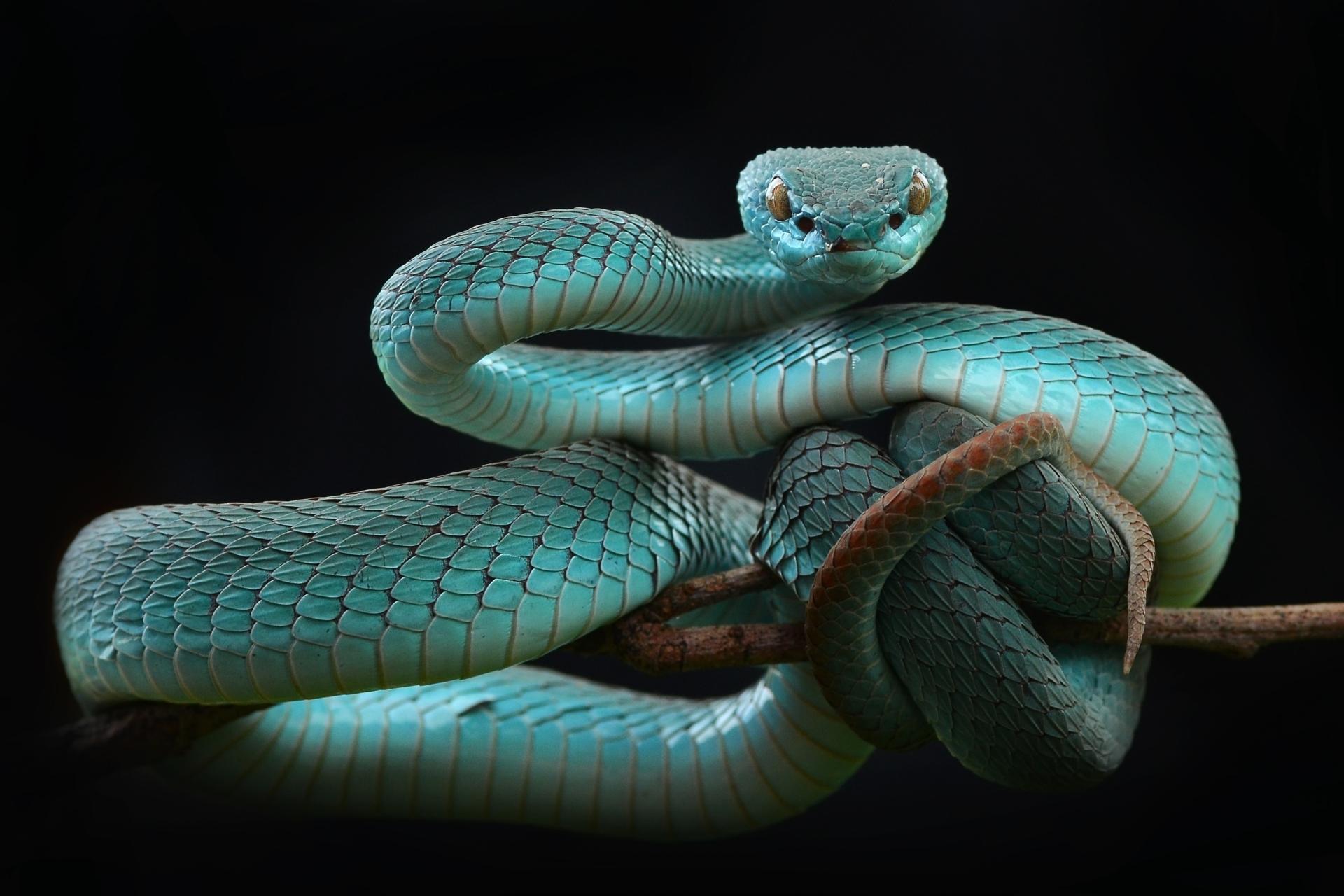Im 225 Genes Y Fondos De Pantalla De Serpientes Wallpapers Hd