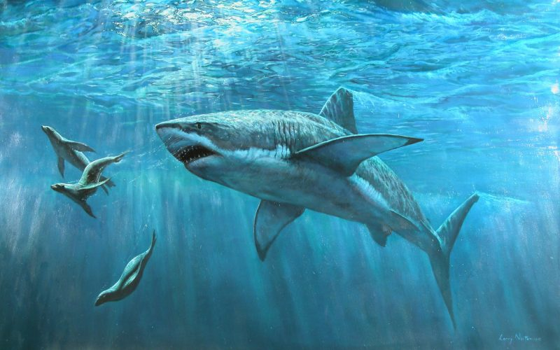 Tiburon Wallpapers