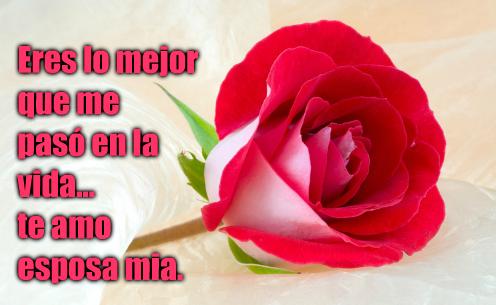 Imágenes de rosas rojas con frases romanticas