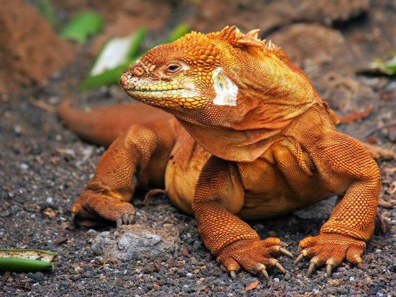 Fotos del Dragón de Komodo