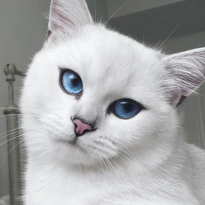 El Gatos más guapo del mundo