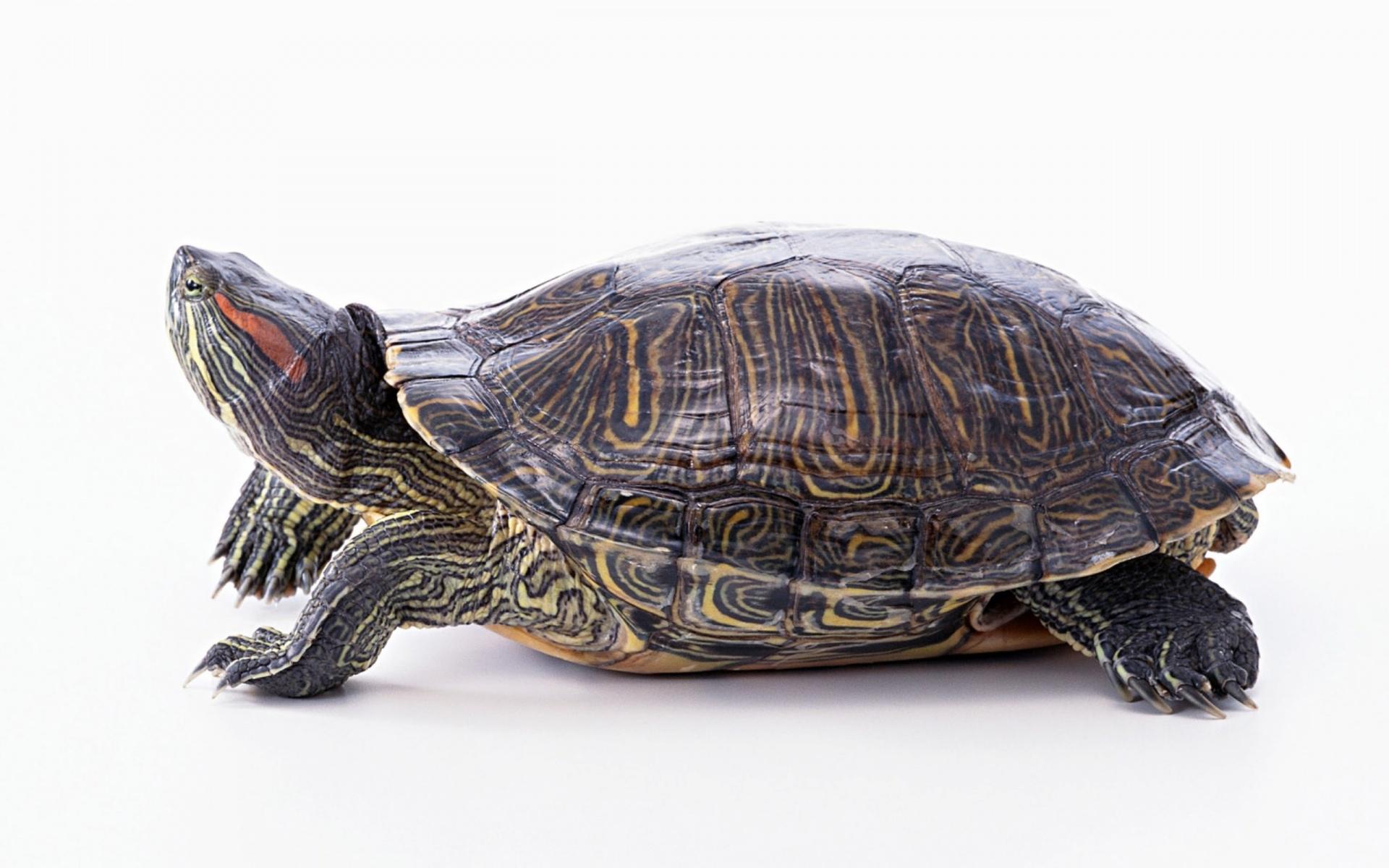 La tortuga vacilona descargar facebook