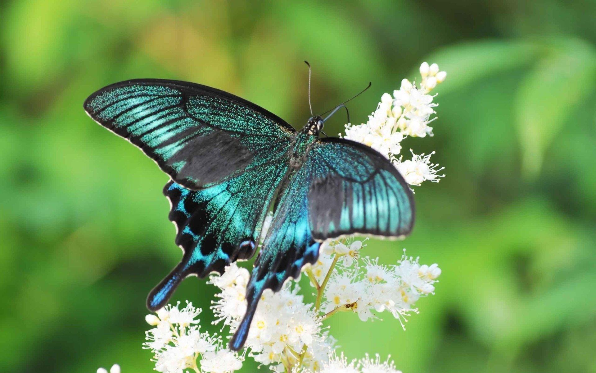Fotos de Mariposas, Imágenes de Mariposas de colores Gratis