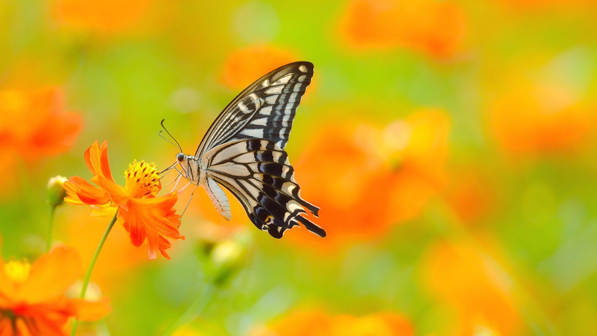 Imagenes De Mariposas De Colores: Fotos De Mariposas, Imágenes De Mariposas De Colores Gratis